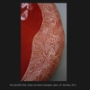 Thumb_small_red_sgraffito_plate.sum10