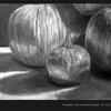Thumb_small_pumpkins_1000