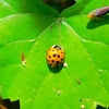 Thumb_small_colorful_buggie