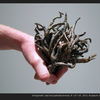 Thumb_small_falk_studentwork_overgrowth_web