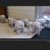 Thumb_small_falk_student_work_elephants_in_the_room_web
