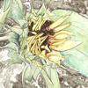Thumb_small_helianthus web