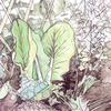 Thumb_small_lactuca web