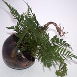 Thumb_plant72dpi