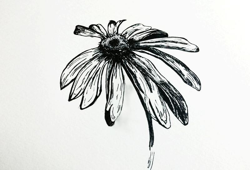 Large_daisy
