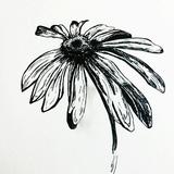 Thumb_daisy