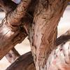 Thumb_small_tree72